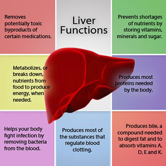 liver-disease-s3a-liver-functions