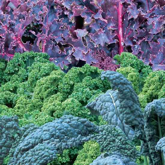 Kale-Varieties jpg